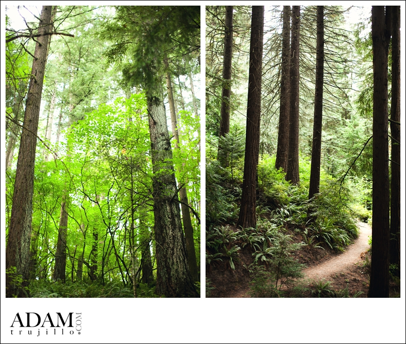 Portland Photography Wedding and Engagement Photography 2